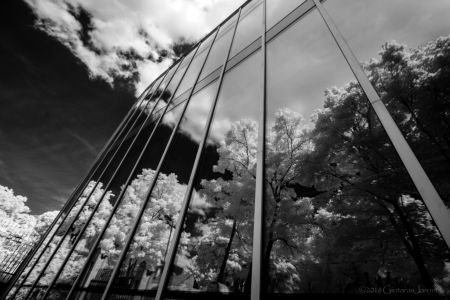 Infraraudonoji ir monochrominė fotografija. Nuotr. aut. Gintaras Jaronis